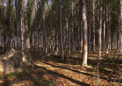bosque_2